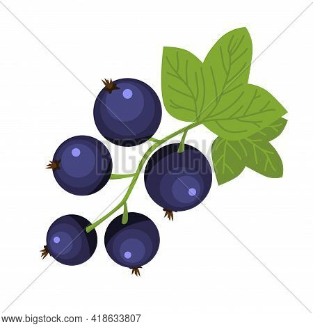 Black Currant Berry Brunch Hand Drawn Icon Green Leaves Dark Blue Berries Vector Illustration Of Ric
