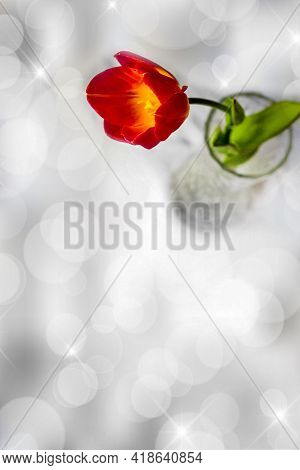 One Red Tulip With A Green Leaf In A Vase. Medium Shot. Shooting From Above. Light Vertical Backgrou