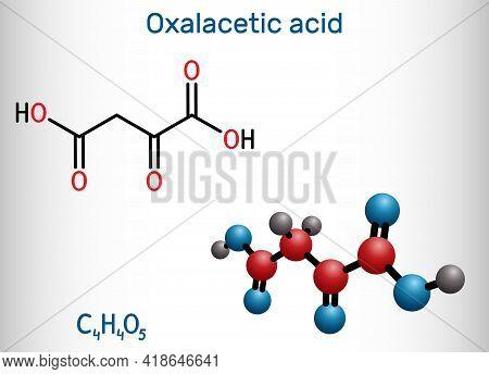 Oxaloacetic Acid, Oxalacetic Acid, Oaa, Oxaloacetate Molecule. It Is Oxodicarboxylic Acid,  Metaboli