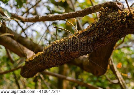 Moss On The Branch Of The Tree In The Subtropical Broadleaf Forest. Used Selective Focus.