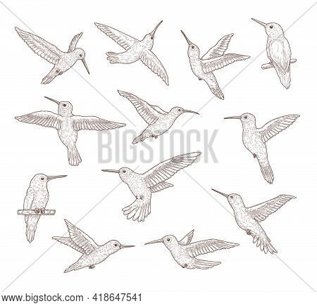 Set Of Flying Hummingbirds. Flat Vector Illustration..colibri Pattern Sketches In Hand Drawn Style I