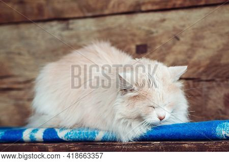Cat Sleeping On A Rustic Wooden Bench Outside. Cat Sleeping On A Rustic Wooden Bench Outside. Adorab