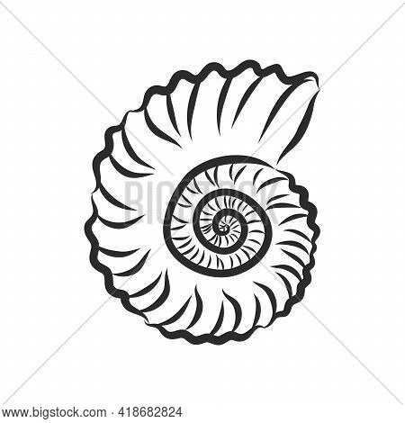 Hand Drawn Set Of Various Seashell. Clam Shell, Vector Sketch