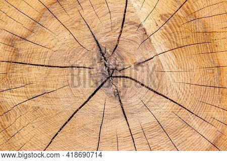 Wooden Rings, Annual Rings, Cut Tree Trunk. Cross Section Of A Tree Trunk, Cracked Structure Of Annu