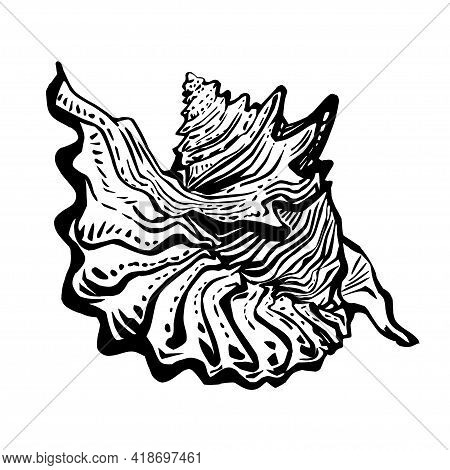 Sea Fauna Doodle Marine Seashell In Live Line Hand Drawn Style Of Black Ink. Realistic Sketch Design
