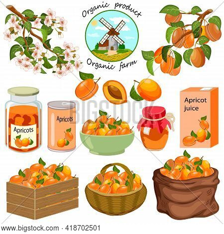 Set With Apricots And Their Products.branches With Apricots And Products From Apricot On A White Bac