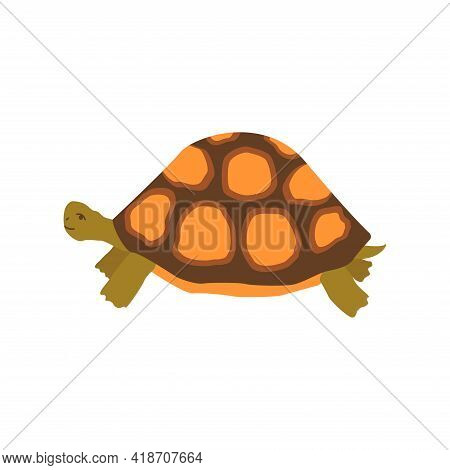 Cute Happy Turtle. Colorful Vector Isolated Hand Drawn Illustration. Sea Turtle. Amphibian From The