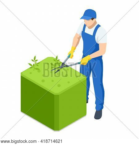 Agricultural Work. Isometric Gardener Work On Shrub, Remove Excess Leave. Man Hands Cuts Branches Of