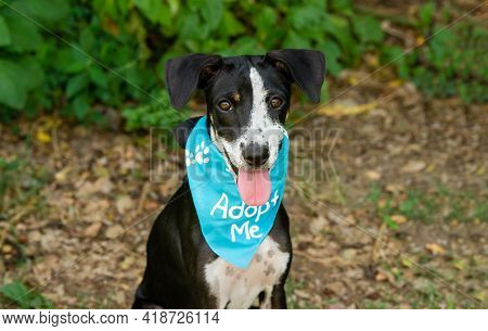 A Animal Shelter Dog Is Wearing An Adopt Me Bandana Looking Straight At The Camera