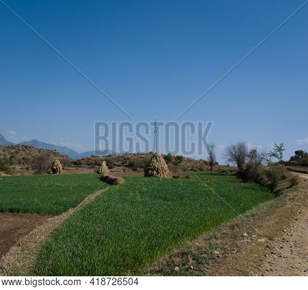 Rural Area In Himachal Pradesh India Green Fields And Village Lifestyle.
