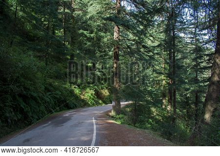 Beautiful Road In Cedar Forest On Sunny Day