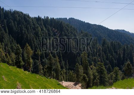 Beautiful Himalayan Cedar Forest And Farms In Slope In Rural Area