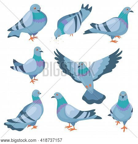Cute Pigeons Vector Illustrations Set. Flock Of Cartoon Doves Standing, Flying And Pecking Seeds Iso