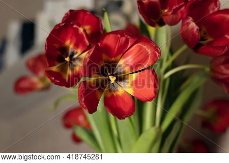 Close Up Bouquet Of Red Tulips On Gray Textured Background. Fading Red Tulips On A Gray Background.