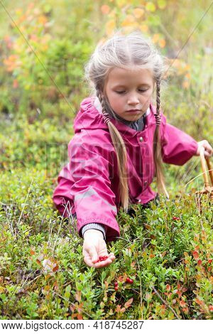 Cute Little Caucasian Girl Is Picking Wild Berries In Northern Autumn Forest