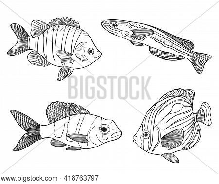 Reef Fishes Sketch Vector Illustration. Hand Drawn Underwater Animals Set. Realistic Nature Elements