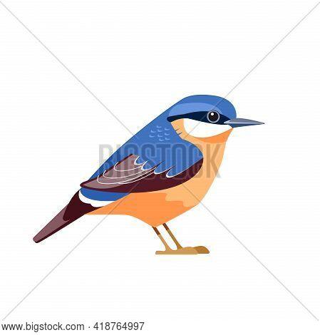 Eurasian Nuthatch Or Wood Nuthatch, Sitta Europaea Is A Small Passerine Bird. Cartoon Flat Beautiful