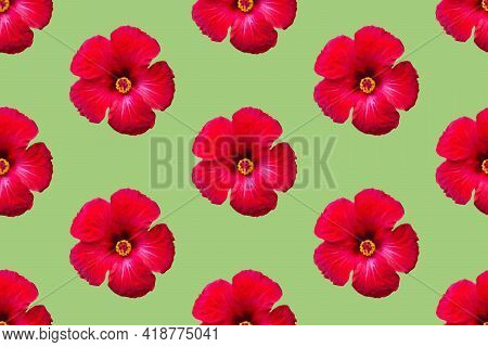 Seamless Floral Pattern From Red Hibiscus Flowers On Green Background. Tropical Summer Backdrop For