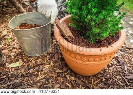 Garden and gardening - Mulching potted plants with pine bark against to weeds