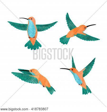 Cute Hummingbird Set. Vector Illustration Of Small Tropical Birds.