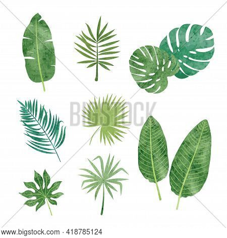 Tropic Leaves Set. Vector Illustration Of Tropical Plants.