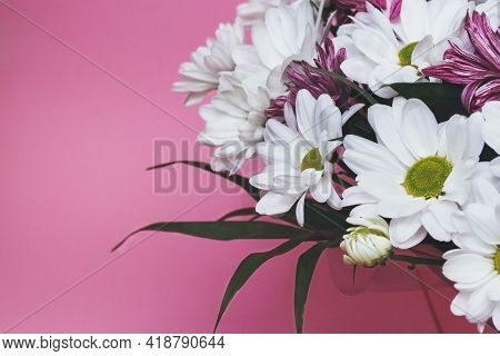 Bouquet Of Fresh White And Pink Chamomile Chrysanthemums
