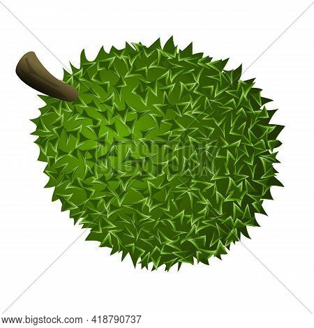 Whole Durian Icon. Cartoon Of Whole Durian Vector Icon For Web Design Isolated On White Background