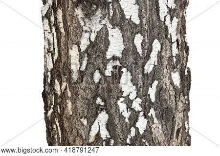 Birch Bark Texture Isolated On A White Background With Beautiful Birch Bark Pattern For Beautiful Na