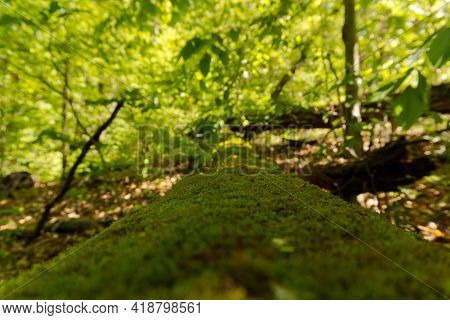 Mossy Log In The Forest Hiking Trail Path