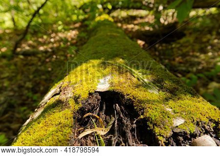 Mossy Log On A Green Forest Path