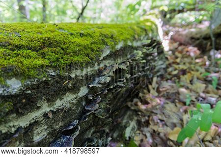 Mossy Green Log In The Forest On A Hiking Trail