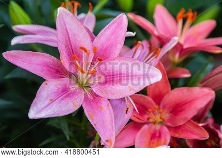 Spring Lily Flower, Spring Background. Spring Composition In Soft Tones, Spring Card, Colorful Sprin