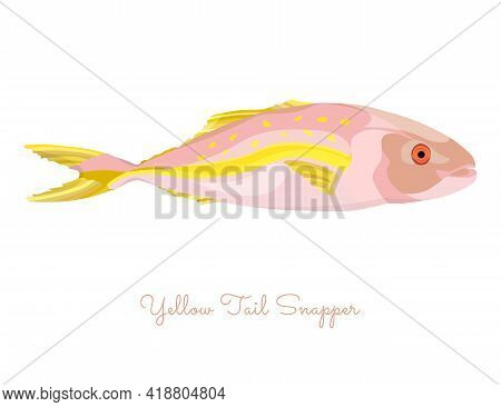 Yellow Tail Snapper Fish Made In Flat Style. Colored Yellow Tail Snapper Without Outlines, With Ligh