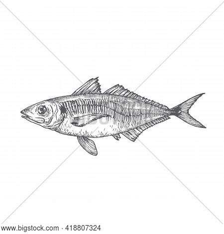 Wild Atlantic Scad Hand Drawn Doodle Vector Illustration. Abstract Fish Sketch. Engraving Style Draw