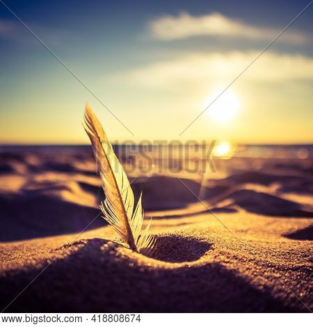 A Beautiful White Feather In The Beach At The Baltic Sea. Sunset Scenery With Birds Feather Ar The S