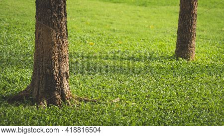 Sunlight And Shadow On Surface Of Tree Trunk On Green Lawn In Public Park Area