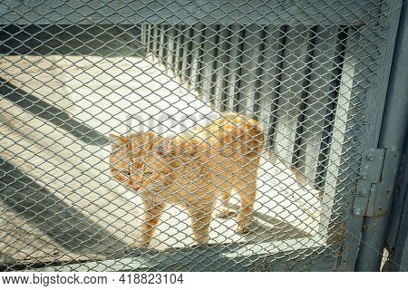 An Animal In A Cage. The Cat Is Locked In A Cage. In Captivity. Homeless Animal