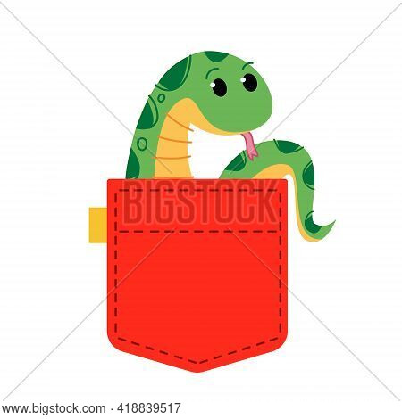 A Green Python Snake Sits In Clothes. A Cute African Animal Peeps Out Of The Bag. Cute Red Jeans Poc
