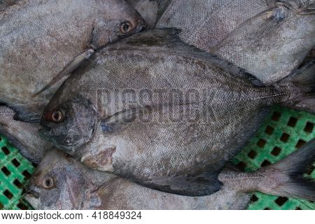Top View Of Black Pomfret Fish For Sale.
