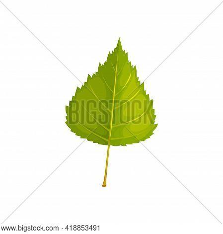 Birch Leaf Vector Icon, Cartoon Foliage, Fallen Tree Leaf Of Green Color. Natural Design Element, Bo