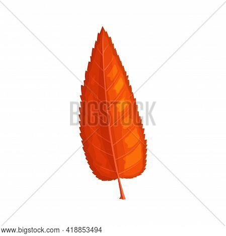 Autumn Mountain Ash Leaf Vector Icon, Cartoon Foliage, Fallen Tree Leaf Of Red Or Orange Color, Desi