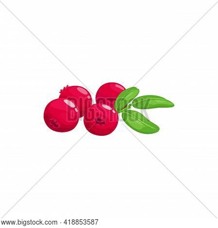 Cranberry, Juicy Mooseberry Bog-berry Isolated Realistic Icon. Vector Moss-berry Fruit, Summer Desse