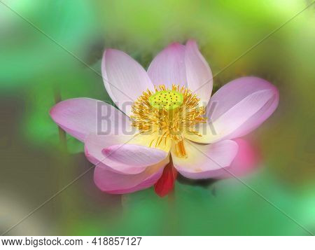 Beautiful Pink Lotus Flower And Lotus Flower Plants, Pure Pink Lotus Flower, Symbol Of Vietnam. Blur