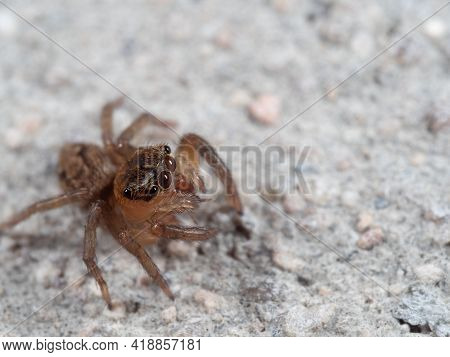 Macro Photography Of Jumping Spider On The Floor