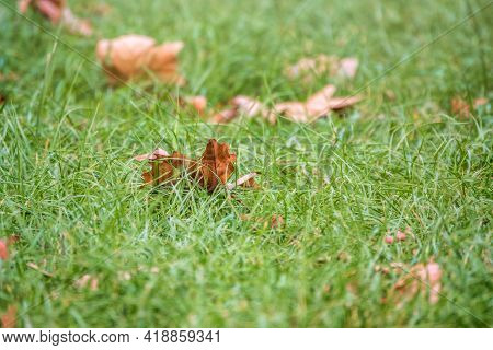 Autumn Grass With Fallen Yellow Leaves In The Sunset Light. Autumn Leaves On Green Grass In The Sunl