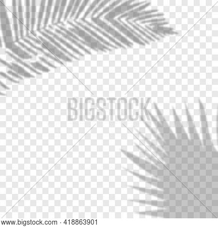 Shadow Background Overlays.transparent Shadow Of Tropical Leaves. Vector Illustration