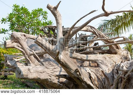 The Roots Of The Wood Are Dried, Used As A Home Decoration, Background Of Dried Wood Roots.