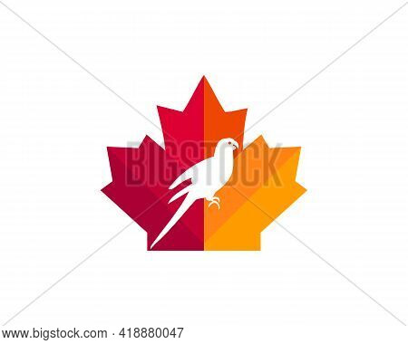 Maple Parrot Logo Design. Canadian Parrot Logo. Red Maple Leaf With Parrot Vector