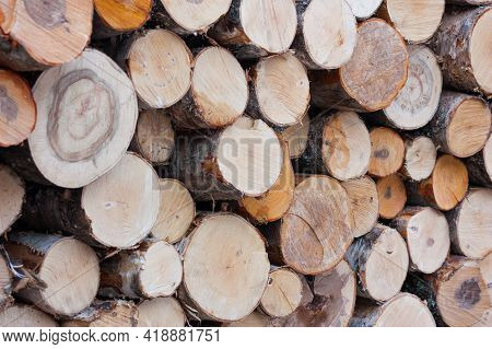 Awed Trees For Firewood Neatly Stacked, Soft Selective Focus