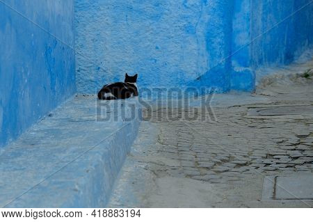 A Single Cat Lying Next To An Alley With Blue Walls In Kasbah Rabat Morocco